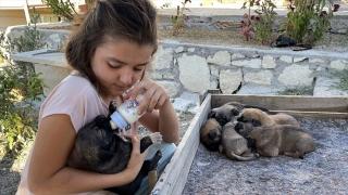 Minik Sude yaralı bulduğu köpek ile 7 yavrusuna özenle bakıyor